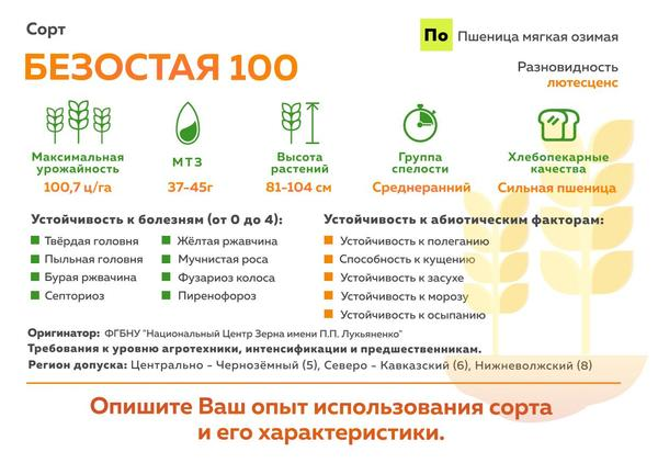 Безостая 100