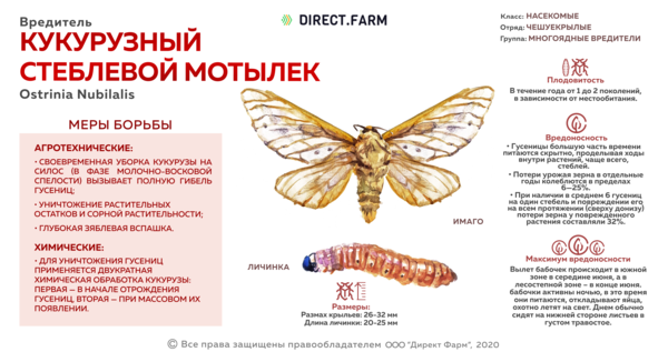 Кукурузный стеблевой мотылек
