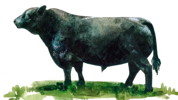Русская комолая порода коров