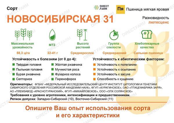 Новосибирская 31