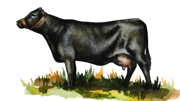 Декстер – порода коров