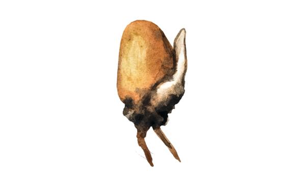 Плесневение семян зерновых