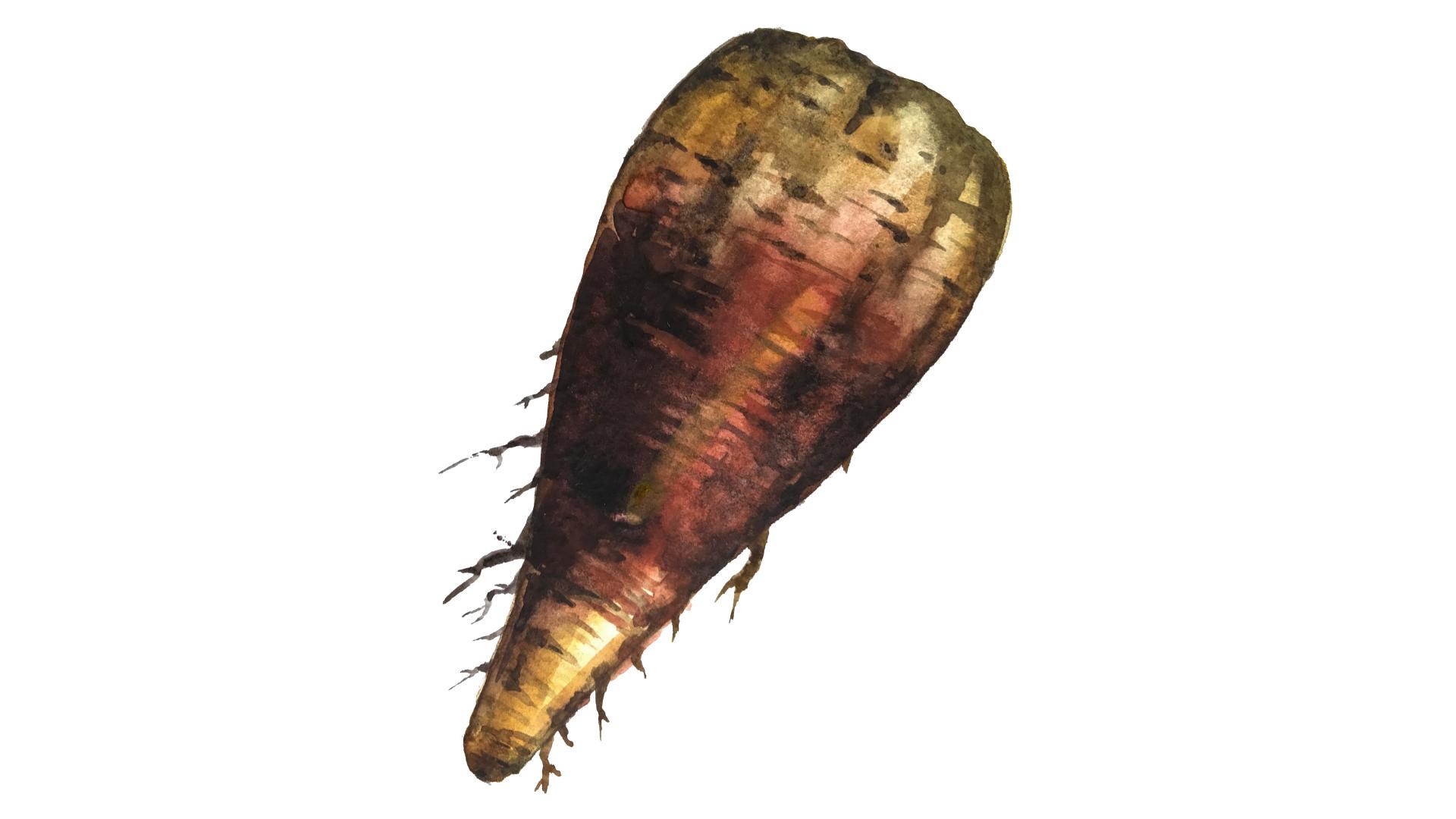 Красная гниль корнеплодов (ризоктониоз)