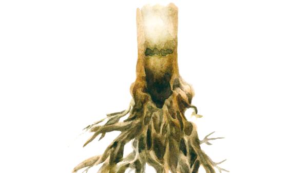 Фузариозная корневая гниль кукурузы