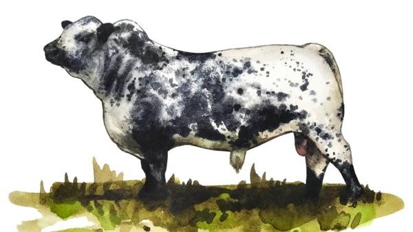 Порода коров Спекл Парк