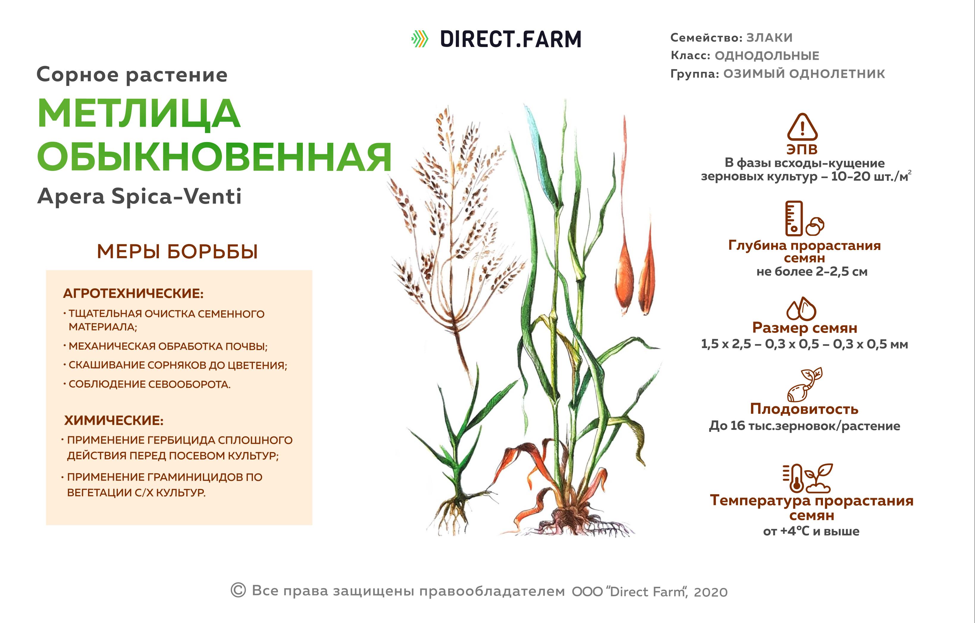 укажите минимальную температуру прорастания семян яровой пшеницы
