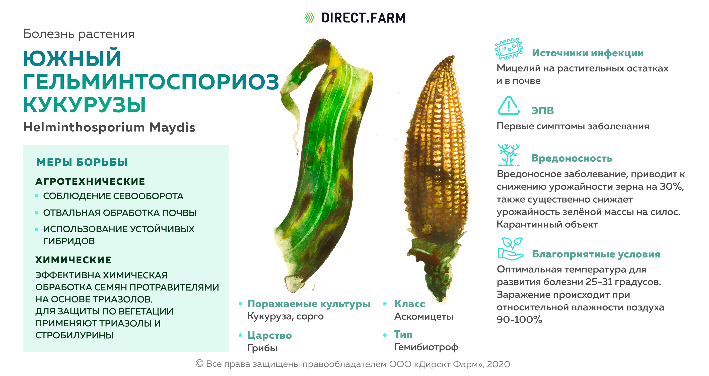 Южный гельминтоспориоз кукурузы