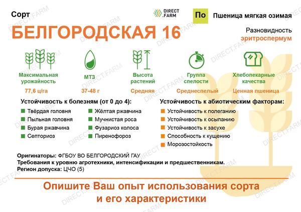Белгородская 16