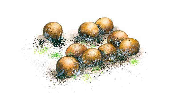 Плесневение семян сои