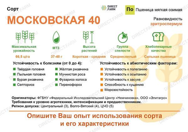 Московская 40