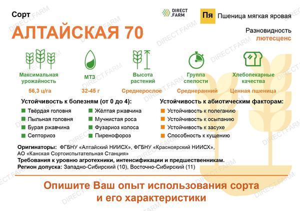 Алтайская 70 сорт мягкой яровой пшеницы